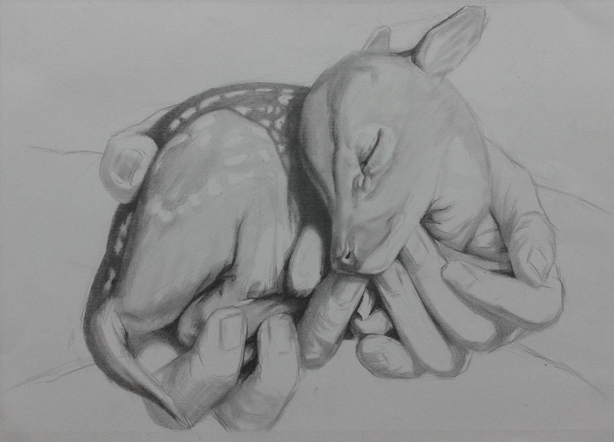2016年9月4日素描动物头像公开课